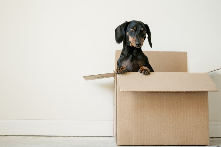 Image of a moving box with puppy in it