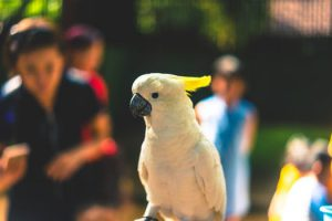 A white bird in the zoo